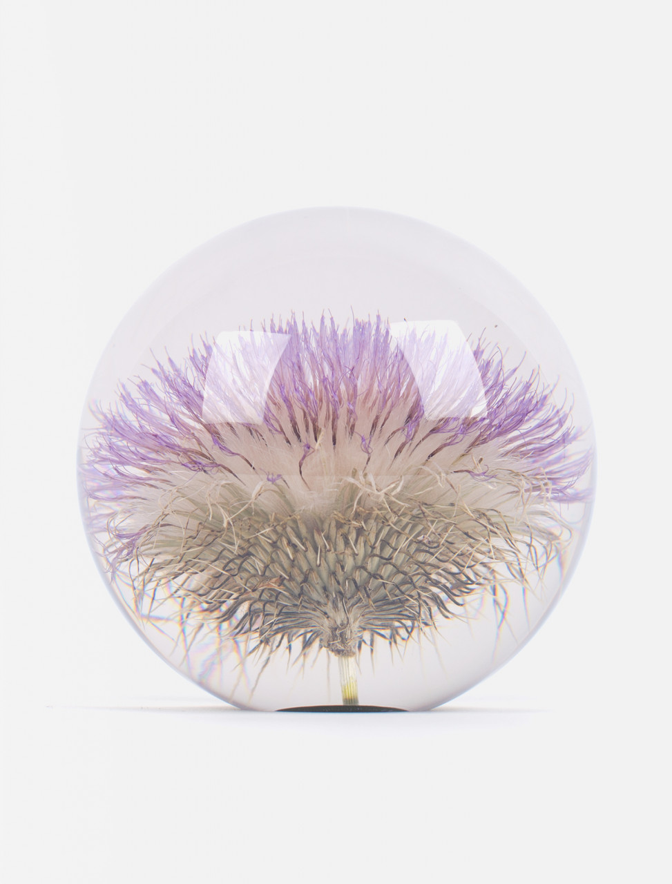 Large Open Thistle Paperweight