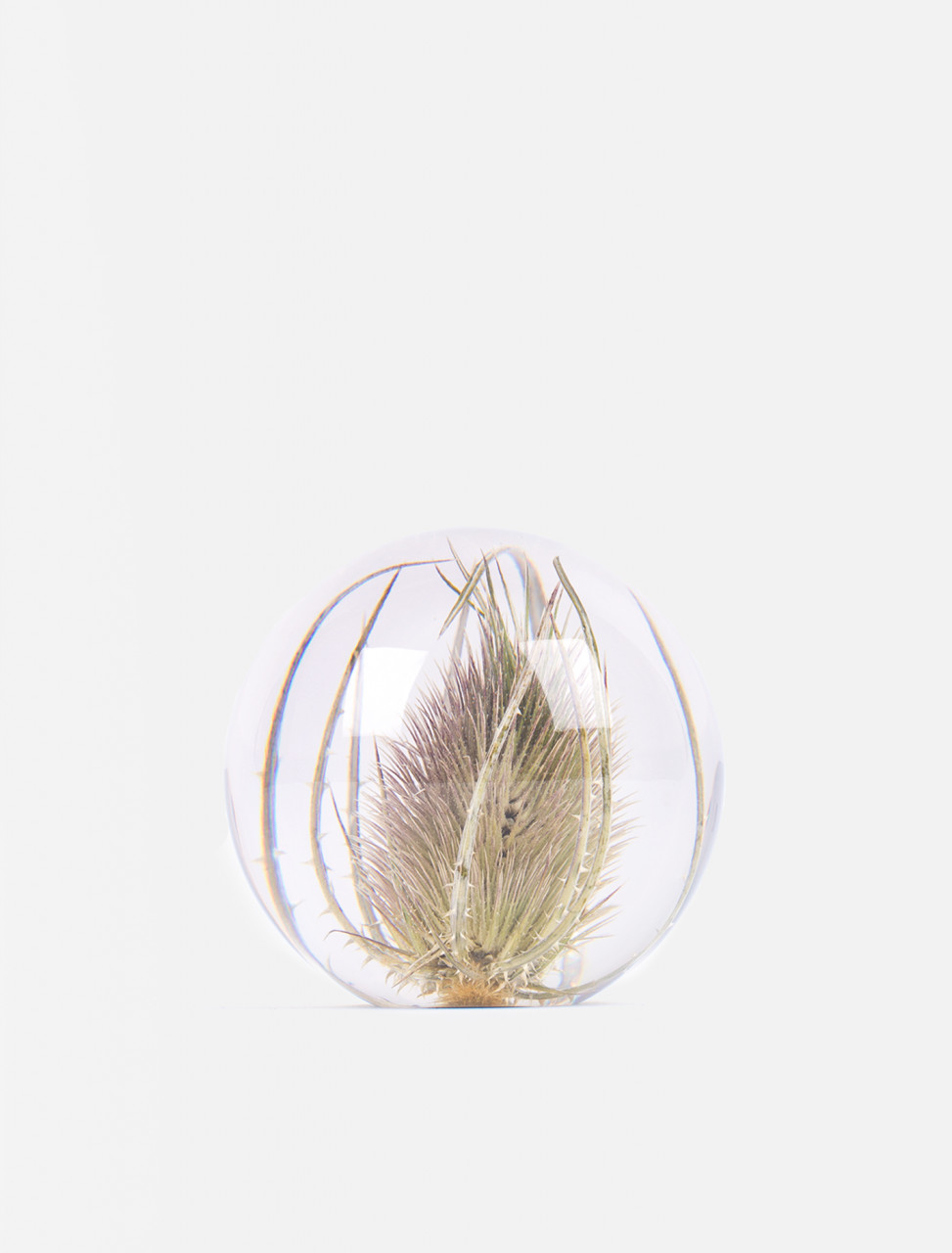 Small Teasel Paperweight