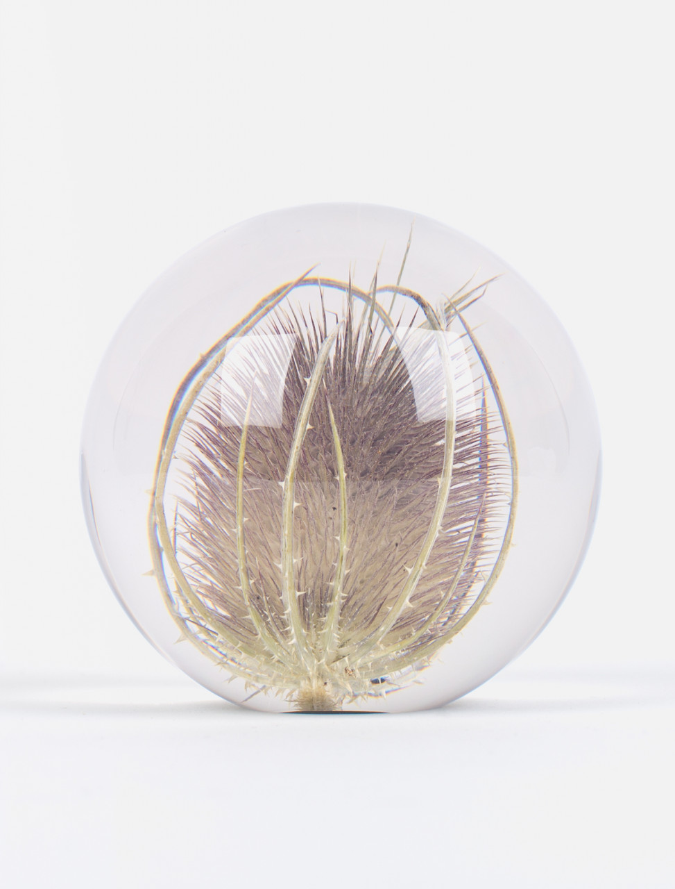 Large Teasel Paperweight
